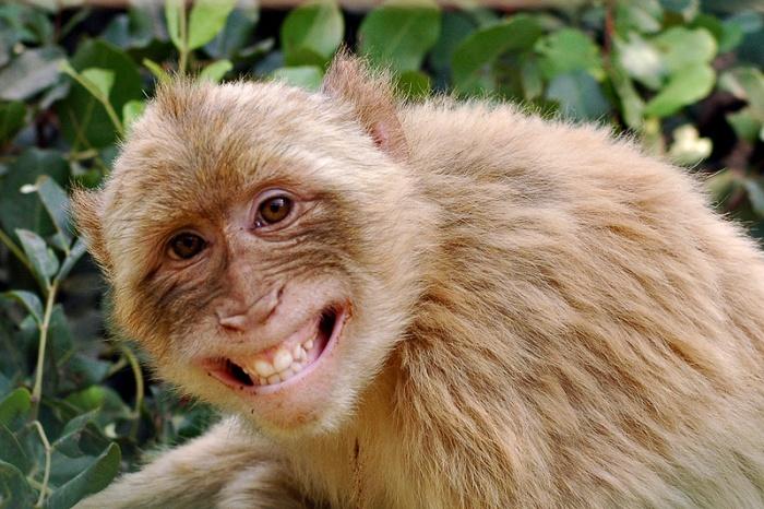 Monkey-Mia-MJK-Australia